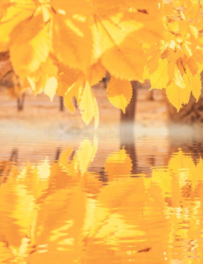 Helder geel gebladerte, de warme herfst stock afbeelding
