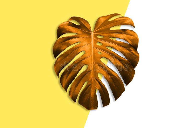 Helder gekleurd blad van palm Exotische installatie Conceptueel eigentijds art. De zomerstijl Kunstgalerieontwerp creatief royalty-vrije stock fotografie