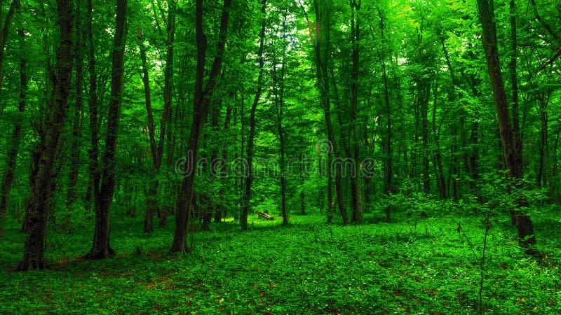 Helder groen bos stock afbeelding