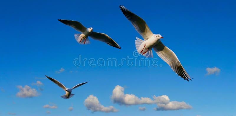 Helder hemelpanorama met zeemeeuwen stock foto's