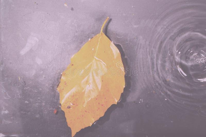 Helder kleurrijk de herfstblad die in water Uitstekende Retro Fil drijven royalty-vrije stock afbeelding
