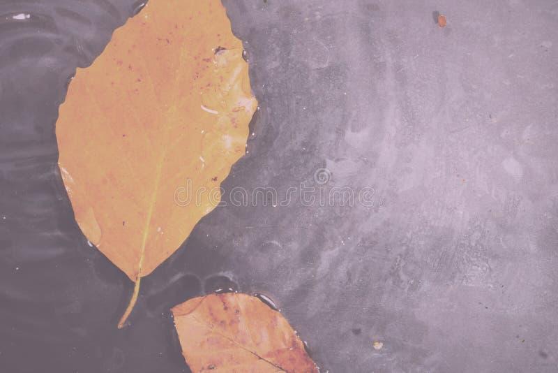 Helder kleurrijk de herfstblad die in water Uitstekende Retro Fil drijven stock afbeelding