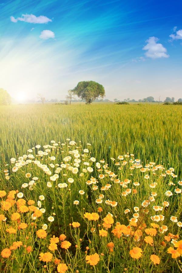 Helder landschap stock foto