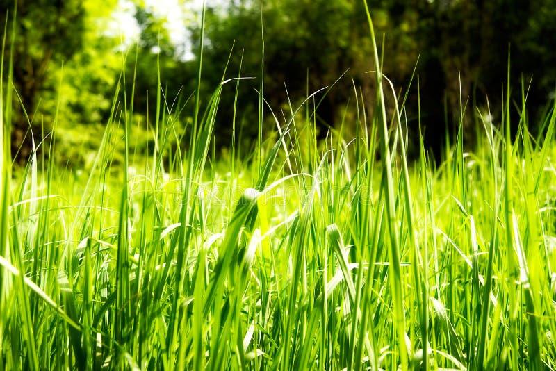 Helder rijk groen gras stock afbeelding