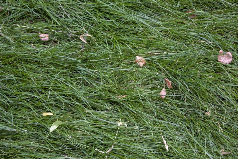 Helder vers groen gras in een weide met droge grijze gele bladeren, hoogste mening natuurlijke oppervlaktetextuur stock fotografie