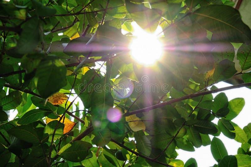 Helder Zonlicht door groene bladeren in de hete zomer royalty-vrije stock afbeelding