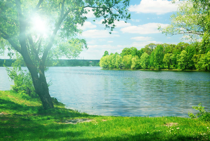 Helder zonlicht en groene boom stock foto's