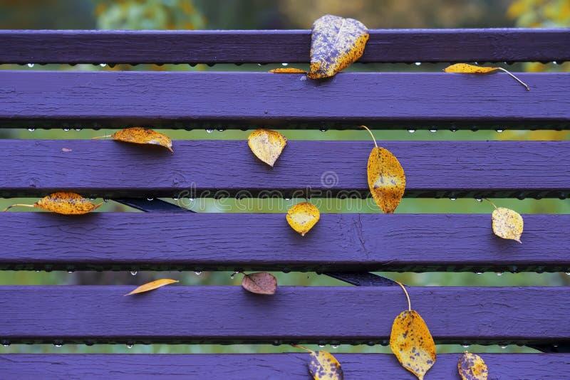 Heldere bank in park met bladerenclose-up en dalingen van regen, gelijkend op nota's over muzikaal personeel De kleurrijke Herfst stock foto's