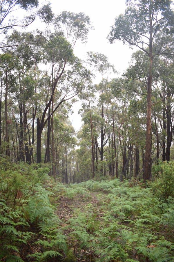 Heldere Benedenheuvel Forest Path royalty-vrije stock afbeelding