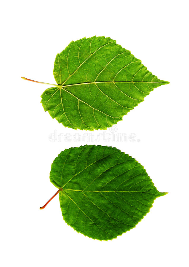 Heldere bladeren royalty-vrije stock afbeelding