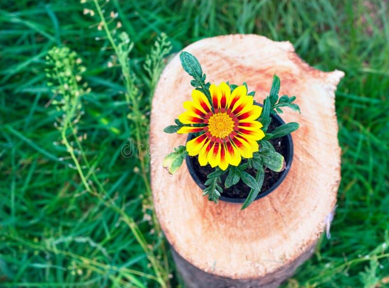 Heldere bloem in een pot op een boomstomp royalty-vrije stock afbeeldingen