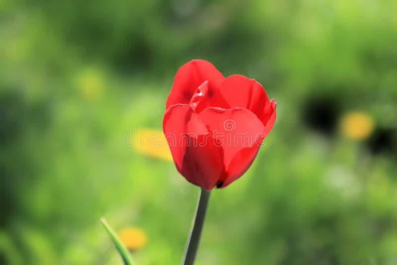 Heldere bloem en zulk een verschillende achtergrond stock fotografie