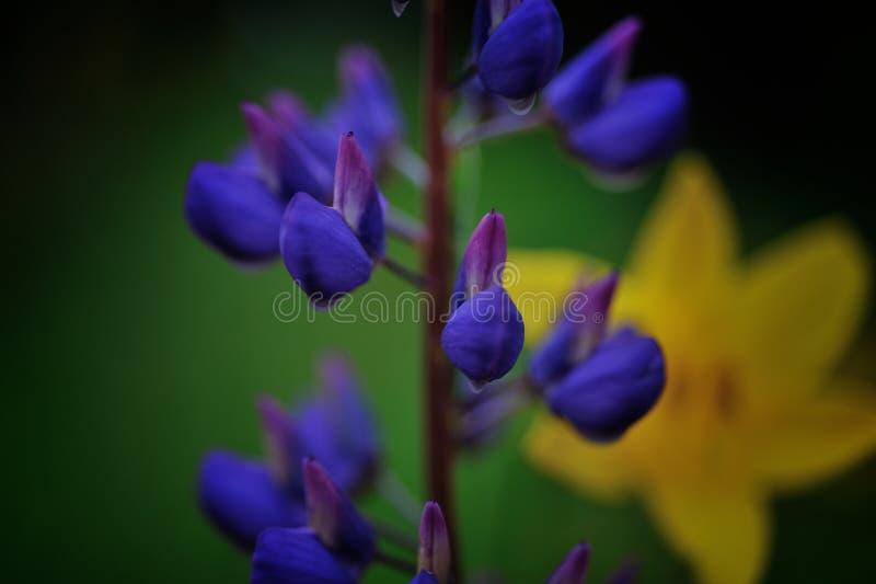 Heldere bloemen in de ochtend stock foto's