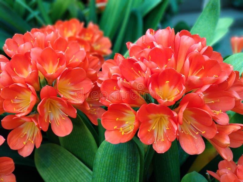 Heldere bloemen in de tuin stock foto