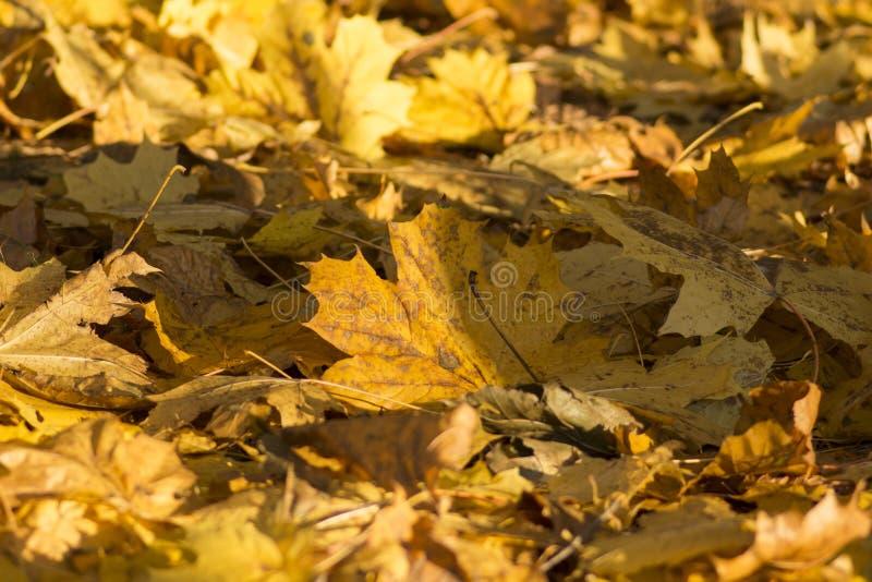 Heldere en Kleurrijke boombladeren in de Herfst royalty-vrije stock afbeelding