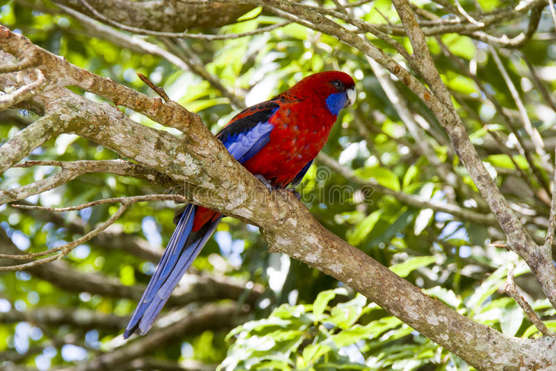 Heldere gekleurde papegaai royalty-vrije stock foto's