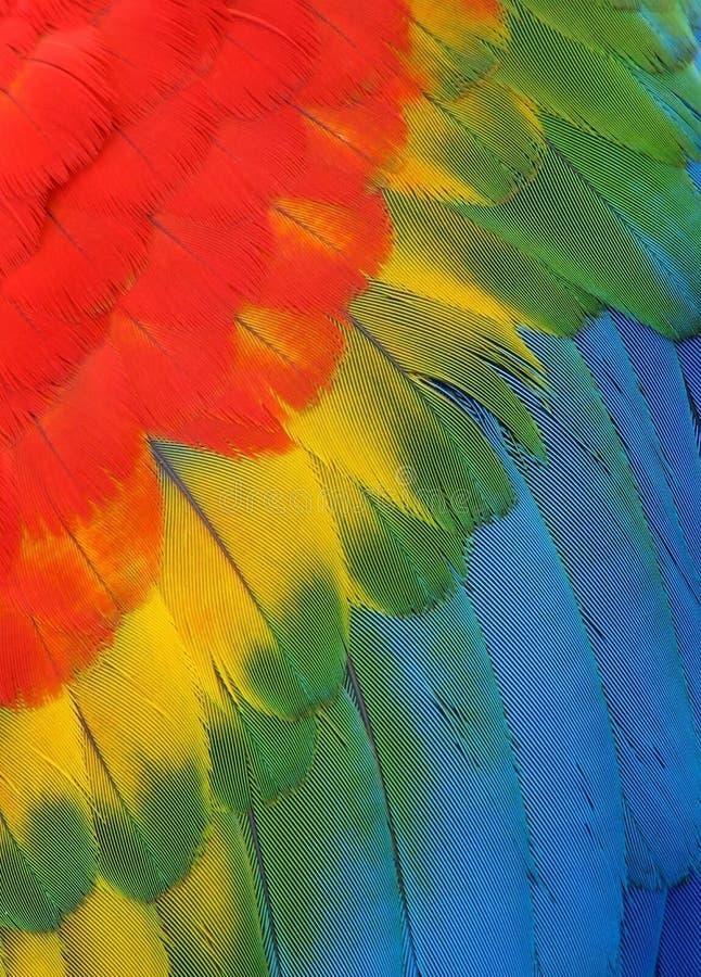 Heldere gekleurde veren