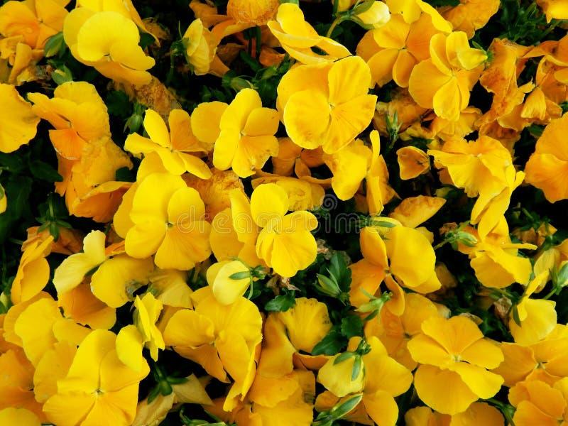 Heldere gele bloemen stock foto's