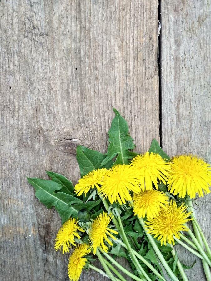 Heldere gele paardebloembloemen op houten achtergrond, achtergrondafbeelding stock fotografie