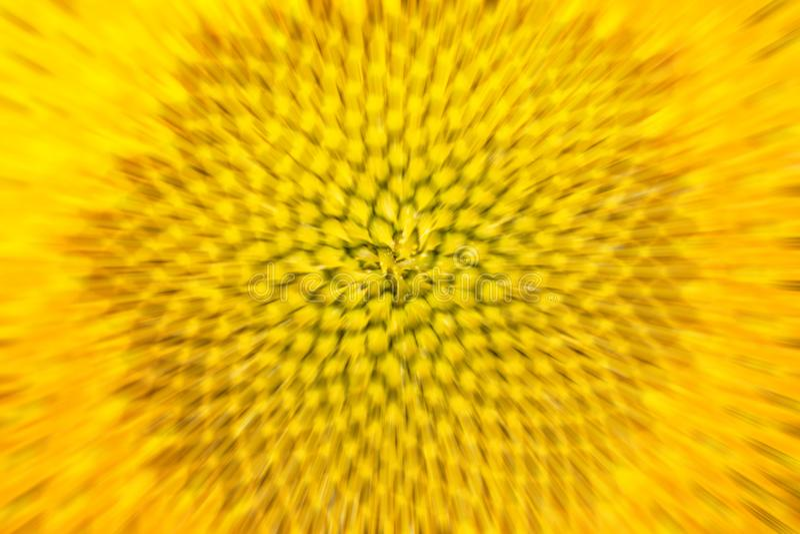 Heldere gele vage zonnebloemachtergrond royalty-vrije stock fotografie