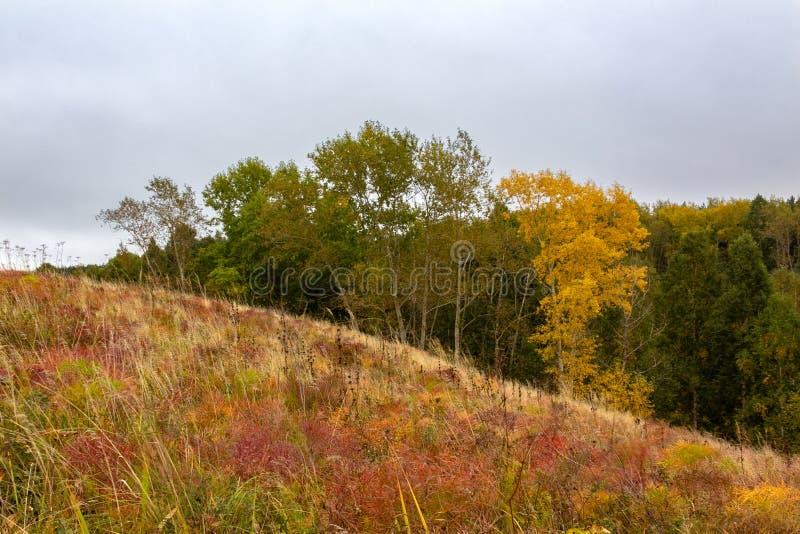 Heldere gouden en rode de herfstweide en een lang geelgroen voorst gedeelte royalty-vrije stock foto