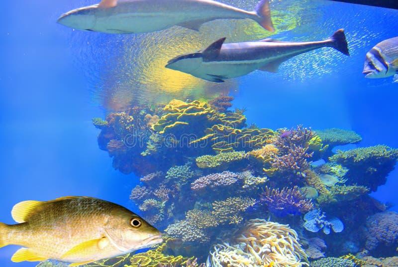 Heldere kleuren van koralen Eilat israël stock foto's