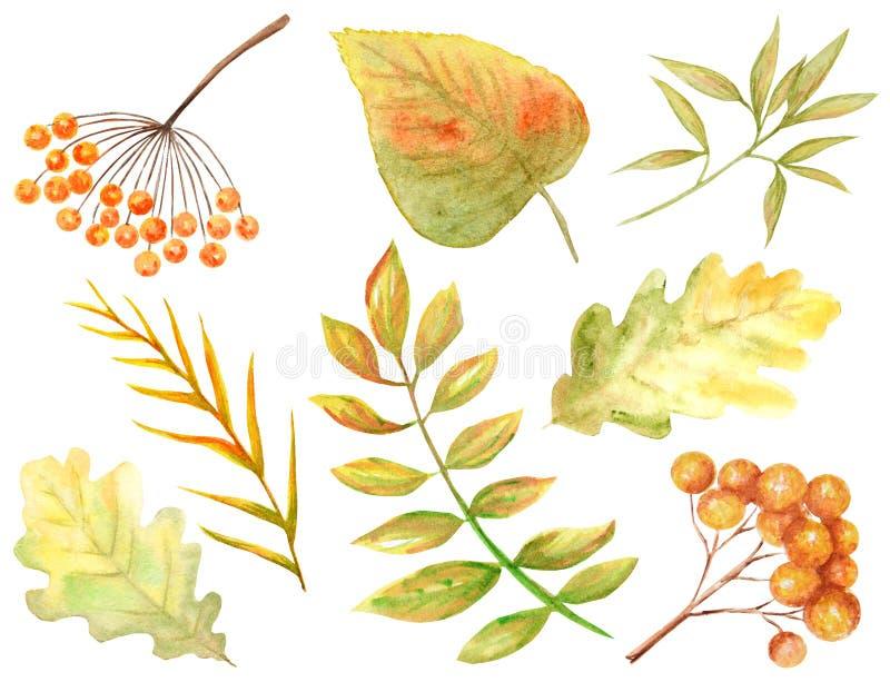Heldere kleurenreeks bladeren van de waterverfherfst Wilde die druiven, iep, linde, eik, lijsterbes, peer op witte achtergrond wo royalty-vrije illustratie