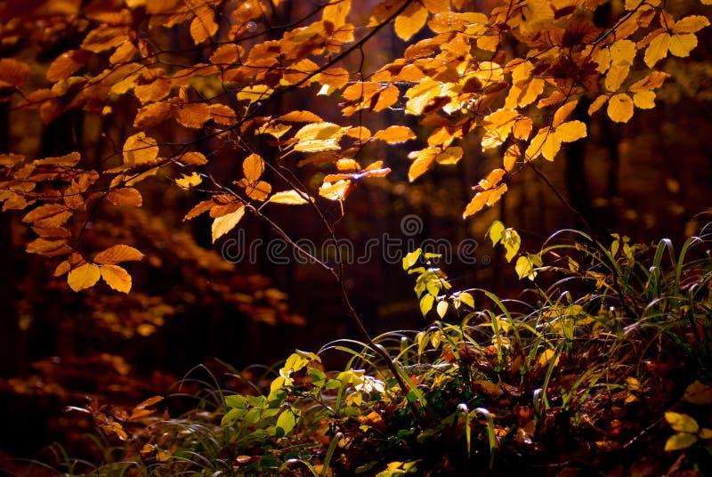 Heldere kleurrijke bladeren op de takken in het de herfstbos royalty-vrije stock fotografie