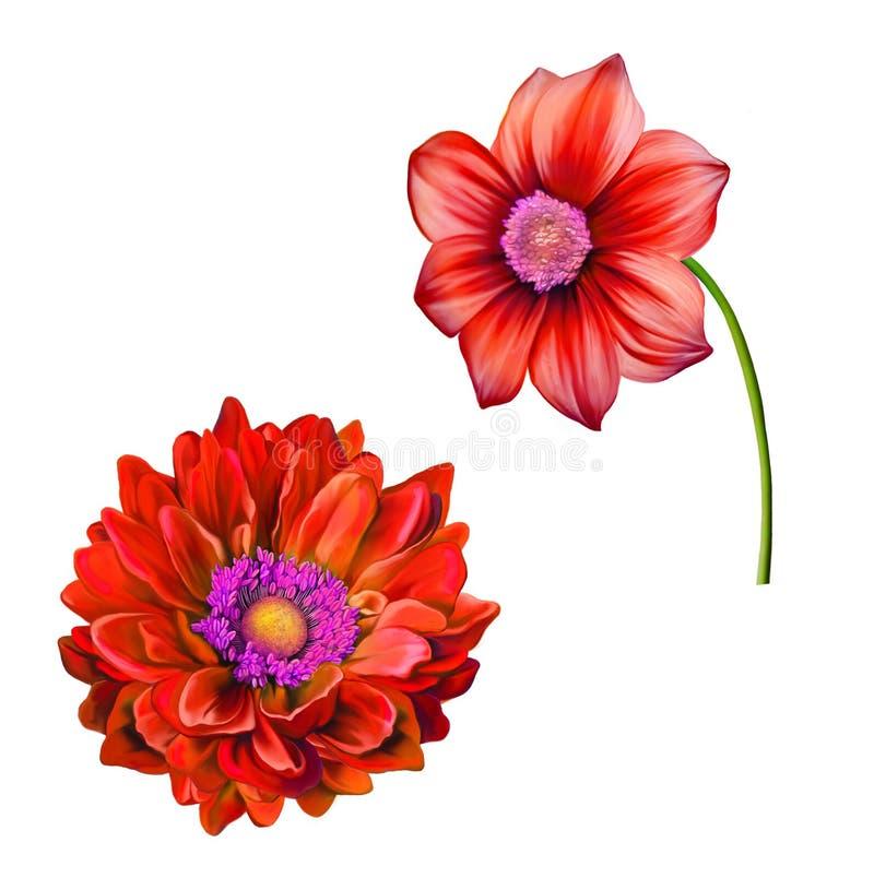 Heldere kleurrijke Dahliabloem, de Lentebloem vector illustratie