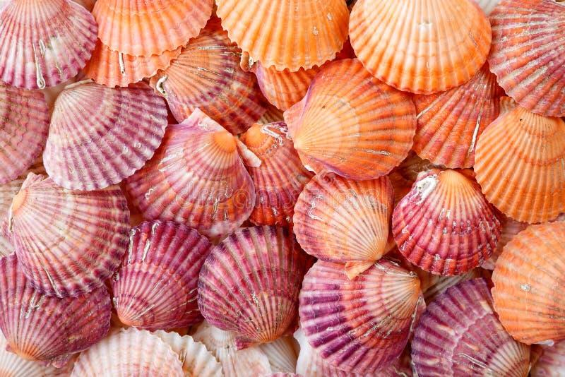 Heldere kleurrijke de zomerachtergrond van kammossel overzeese shells stock afbeelding