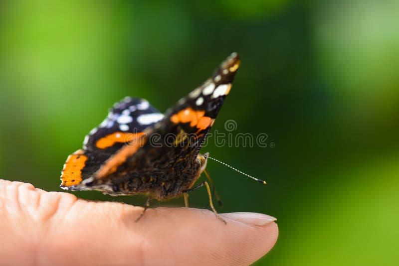 Heldere kleurrijke vlinder in vleugels op een menselijke vinger op een groene achtergrond royalty-vrije stock afbeelding