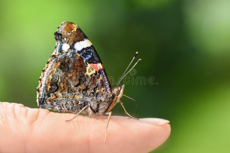 Heldere kleurrijke vlinder in vleugels op een menselijke vinger op een groene achtergrond royalty-vrije stock foto's