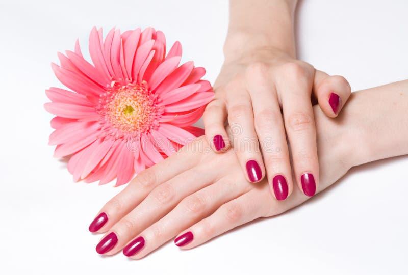 Heldere manicure en roze madeliefje stock afbeeldingen