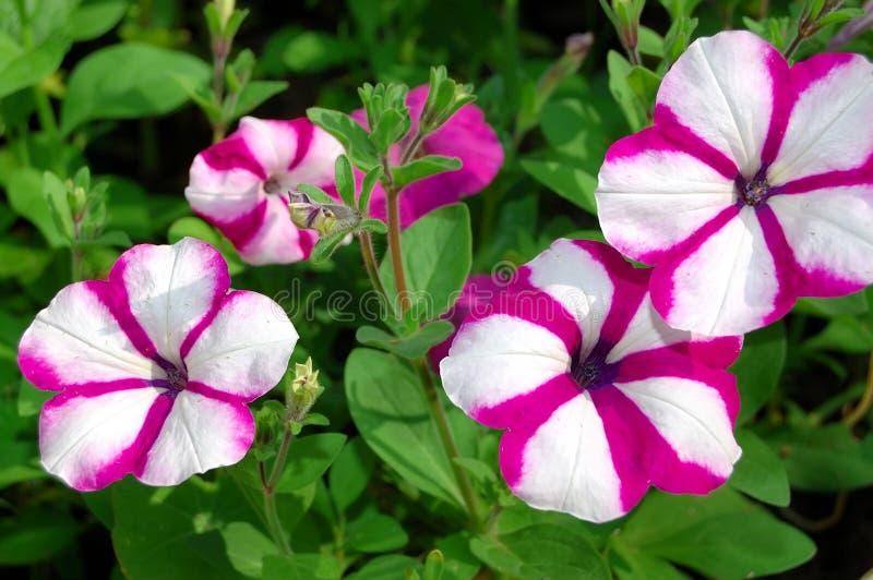 Download Heldere mooie bloemen stock foto. Afbeelding bestaande uit tuin - 10781522