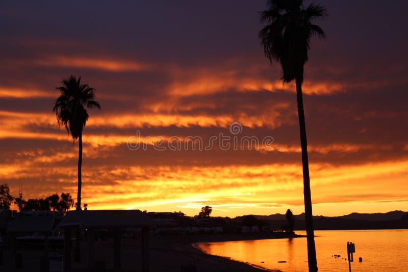 Heldere oranje en rode Zonsondergang over Meer Havasu Arizona met palmen royalty-vrije stock afbeeldingen