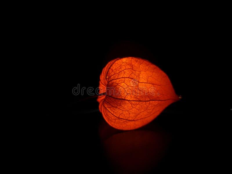 Heldere oranje physalis op een zwarte achtergrond stock afbeelding
