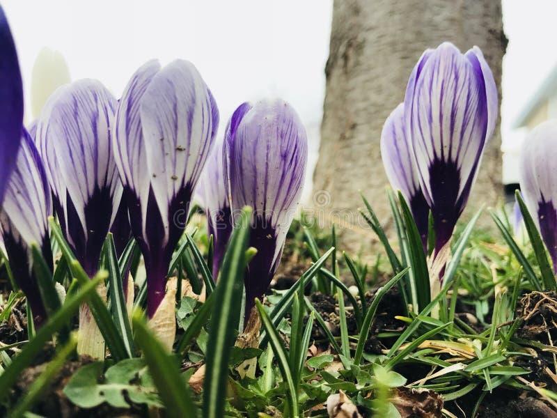 Heldere purpere bloemen stock foto's