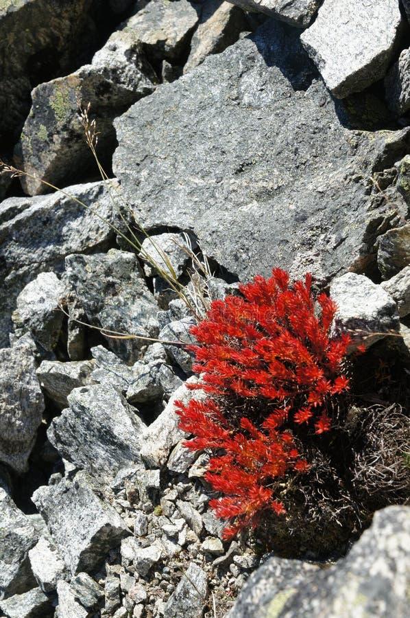 Heldere rode bloemen op stenen royalty-vrije stock afbeeldingen