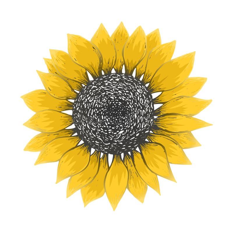 Heldere schets van gele zonnebloembloesem vector illustratie