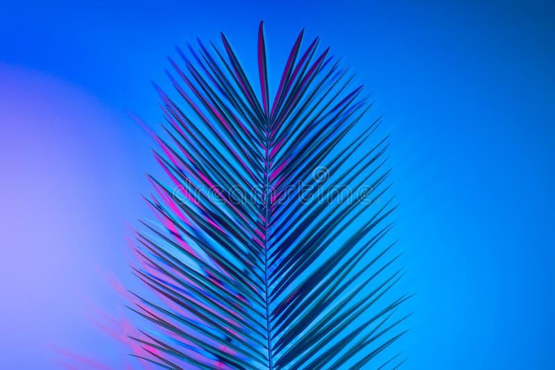 Heldere tropische bladeren van paradijs, palmbladen in neonlicht royalty-vrije stock foto