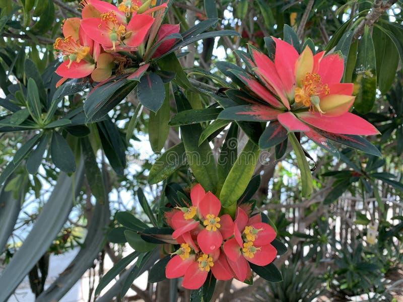 Heldere tropische bloemen stock fotografie