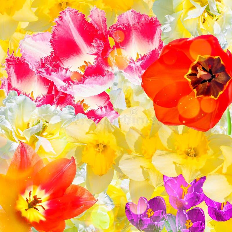 Heldere vakantiecollage van de lentebloemen, close-up royalty-vrije stock afbeelding