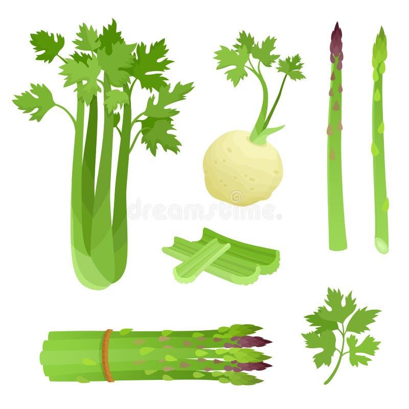 Heldere vectorillustratie van kleurrijke asperge, selderie stock illustratie