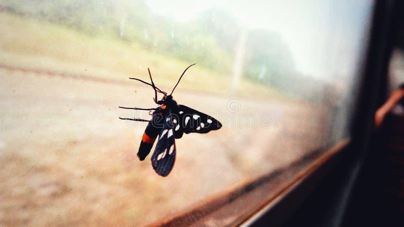 Heldere vlinder op het glas royalty-vrije stock afbeelding