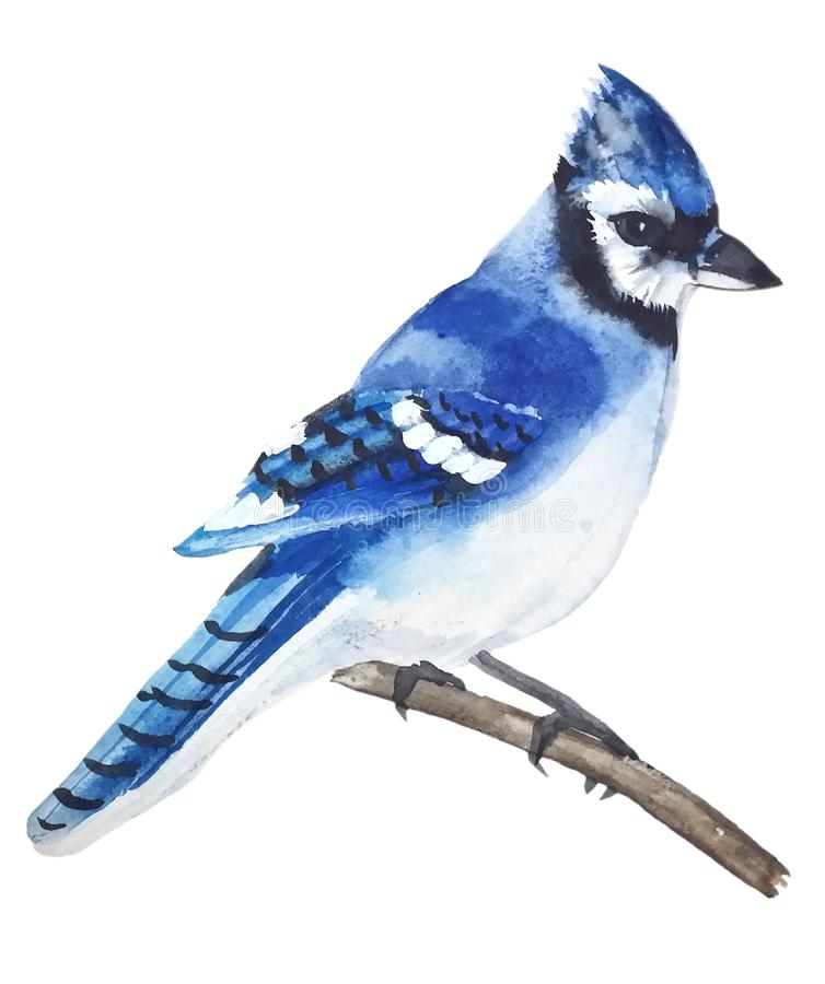 Heldere vogel blauwe Vlaamse gaai met een bosje stock illustratie