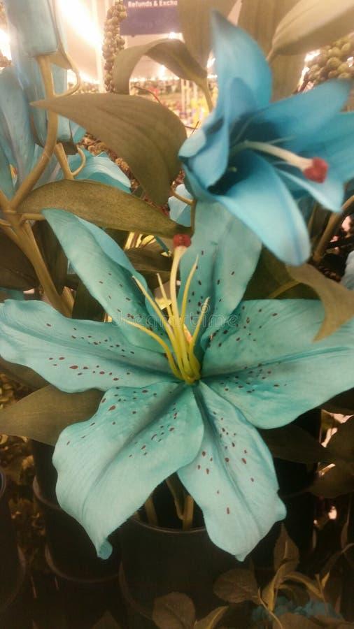Heldere wintertalingstijger lillie stock afbeeldingen