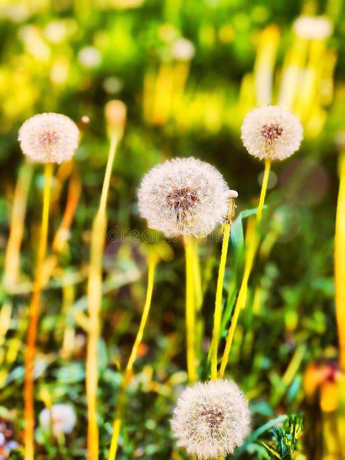 Heldere witte bloemen stock foto
