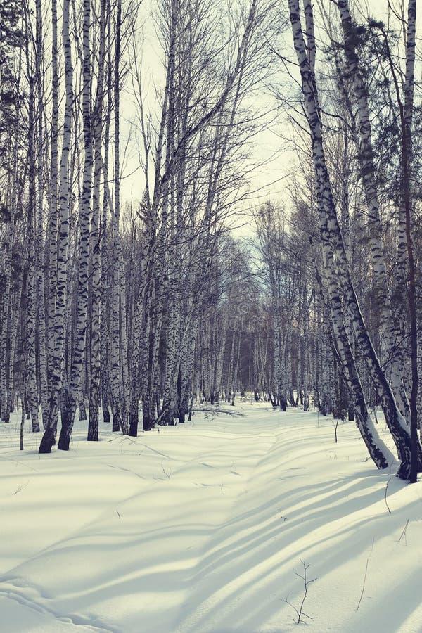 Heldere zonnige dag in een bos van de de winterberk royalty-vrije stock foto