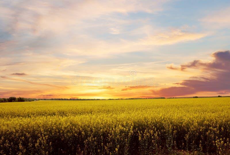 Heldere zonsondergang vóór de regen over raapzaadgebied royalty-vrije stock foto's