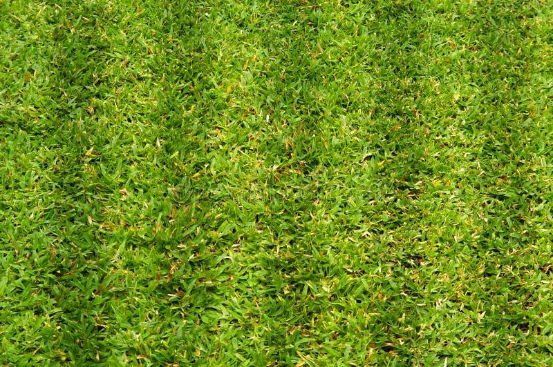 Heldergroen flard van gras stock foto's